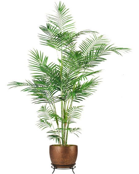 Silk Areca Palm Tree 7 Feet.Silk Areca Trees. Silk Palm Trees make it easy to fill any empty corner of your living room, home or office. Need a silk palm tree for your theater stage, office or  home, these indoor silk areca trees will add that perfect touch. We hope we can help you with your #artificialsilk projects. www.silkspectacular.com