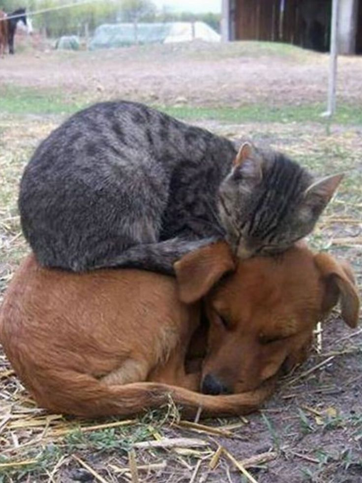 #cat##Dogs##animals##best friens# http://itz-my.com