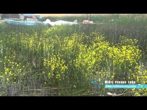 Μικρή Πρέσπα - Πρέσπες by Touristorama.com
