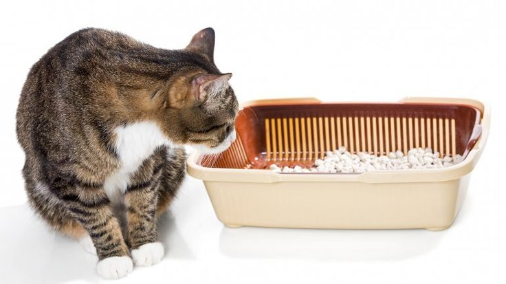Seis situaciones diarias que los gatos odian.Tener la cajita sucia.Cuando un gato orina lejos de su cajita de arena es tiempo de limpiarla. Ellos detestan que su espacio esté contaminado y buscan un nuevo lugar como substituto, que puede ser desde la cama hasta dentro de un placard. Y en esos casos, no lo hacen por amor. Los gatos tienen un olfato 14 veces más poderoso que el de los humanos, por lo que su criterio de limpieza es bastante más exigente que la de sus dueños.