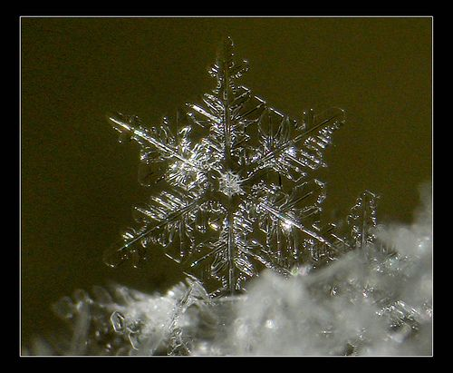 ~ Snow Flake ~