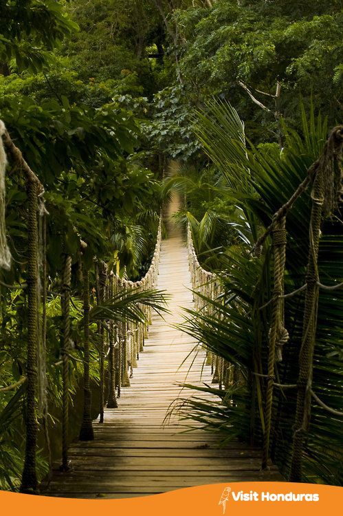 Say yes to exploring Roatan, Honduras.  #Visithonduras #Honduras#Rainforest #Nature #Adventure