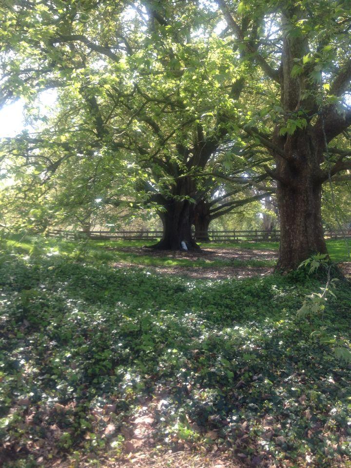 Mossvale park