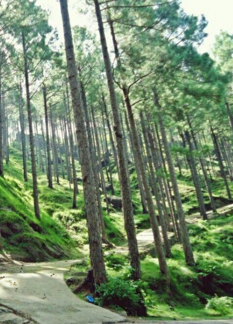 Toli Pir is a hilltop area situated in Tehsil Rawalakot in the Poonch District of Azad Kashmir. Its approximate elevation is about 8800 ft above sea level. It is about 30 km, or a 45-minute drive, from Rawalakot in Azad Kashmir.