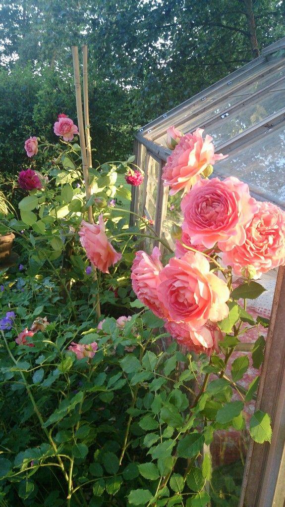 Haven: Lidt blomster…hvis I orker at se flere…..;-)
