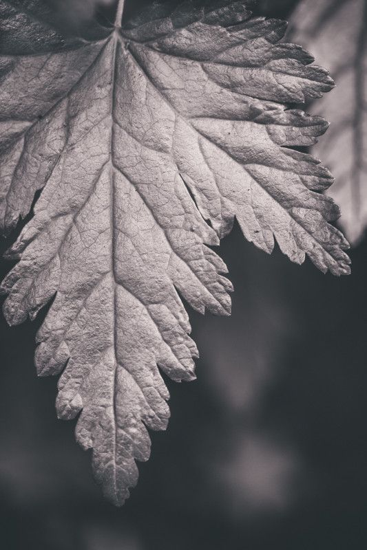 Black and White Forest Leaf - Dramatic Nature Photograph Print