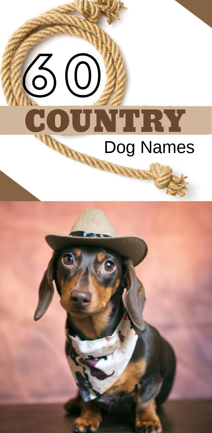 Top Unique Dachshund Names 2019 Country Dog Names Dog Names