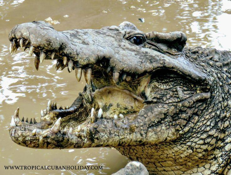 wild life Cienaga de Zapata Matanzas  www.tropicalcubanholiday.com Cuba Kuba Tour Excursion case particular travel to cuba accommodation
