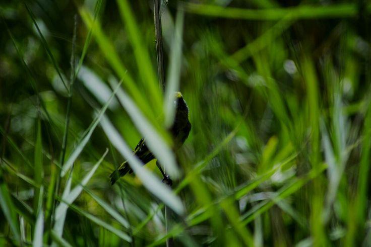 Nature: lone bird ©Artinfection #undisputed