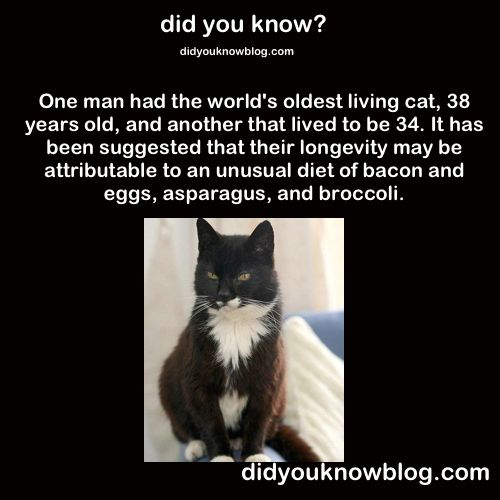 [Image: 0632f2bc2493998ce5782065d86fda27--weird-...-facts.jpg]