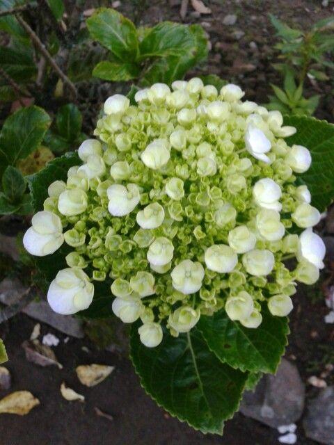 #flower #morning #newlygrow