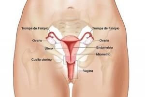 Cuáles son los síntomas del cáncer de cuello de útero