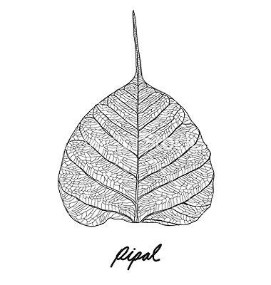 leaf vein vector - Google Search