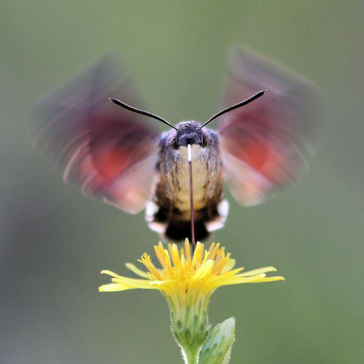 18 Best Nesting Boxes Images On Pinterest Nesting Boxes