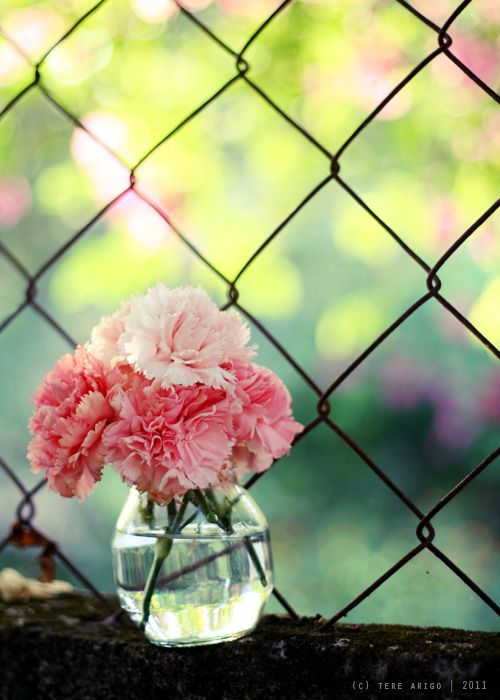Carnations.- I.E. things I want. I also adore that amazing circular small vase..