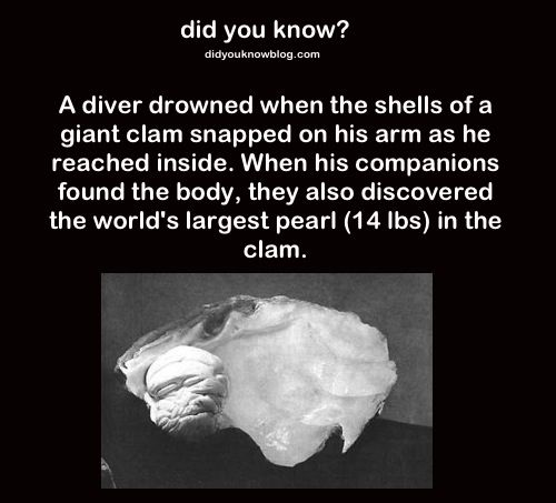 Both true and false. The world's largest pearl IS 14.1 lbs. However, I don't buy the story of its origins because the source (Wilburn Dowell Cobb, owner of the pearl until his death) actually CHANGED the (dubious) story to a SECOND dubious tale. Added to the fact that giant clams just don't pose a threat. Sources: https://en.wikipedia.org/wiki/Pearl_of_Lao_Tzu http://www.sheppardsoftware.com/content/animals/animals/invertebrates/giantclam.htm