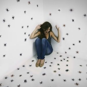Spiders' size exaggerated in minds of those who fear them