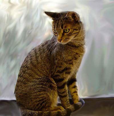 Feline Diabetes by Lisa A. Pierson, DVM :: cat diabetes, cat sugar diabetes.  Diet Recommendations with Food Charts