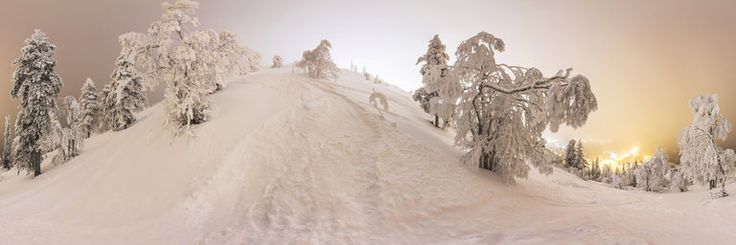 Finland: Trees on the slope of mountain Pyhä in winter