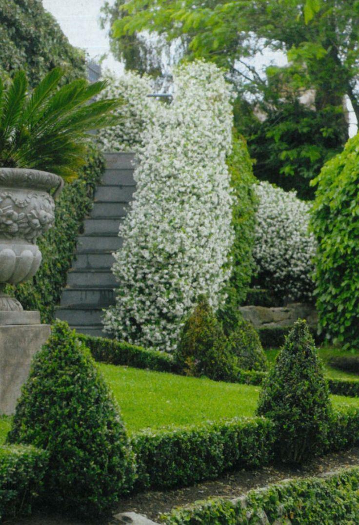 Escalmier topiares blanc urnes massive planters for Evergreen pflanzen