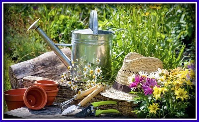 BRICOMANIACOS: Tareas de jardinería en agosto.