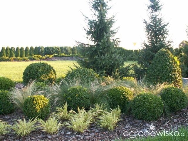 DUŻY OGRÓD małej ogrodniczki 1 - strona 558 - Forum ogrodnicze - Ogrodowisko