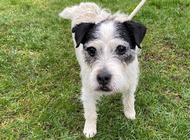 Pin On Dogs Terriers In Rescue