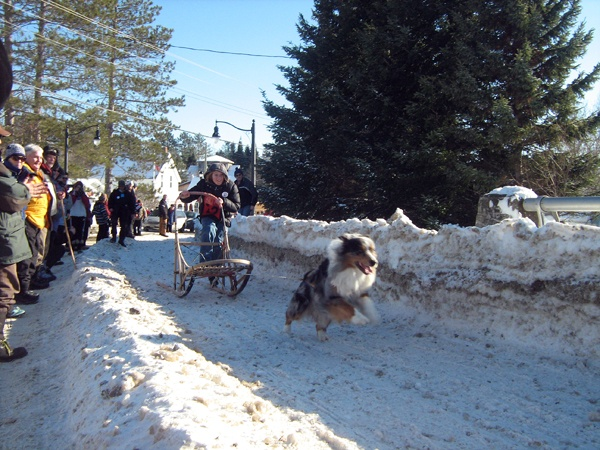 Saturday at the Kid and Mutt races, Kearney Dog Sled Races
