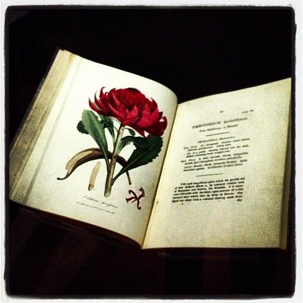 .@Inside History Magazine   Beautiful books #igers #igerssydney #sydneycommunity #statelibrarynsw #sydney #whatson #amaze #gallery #exhibition #instagood #instamood #instaoz #ozhst #picoftheday #bestoftheday #australia