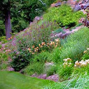 How do you create a great perennial garden design? Which perennial garden plants do you use? Here are some ideas that you will find very helpful.