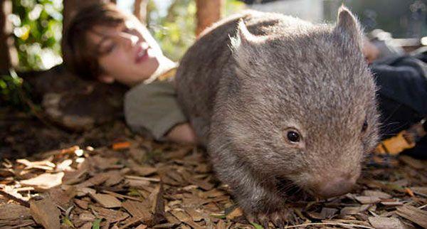 别再说不造去哪儿玩!悉尼7个最好玩的动物园+水族馆详细全攻略,拿走不谢!