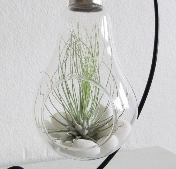 Light bulb terrarium with Fuchsii var. Gracillis by AlvinaDecco
