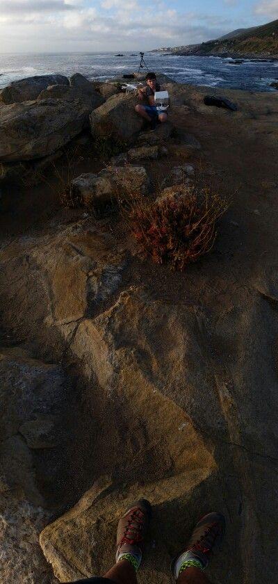 Alexandron roca costanera Zapallar