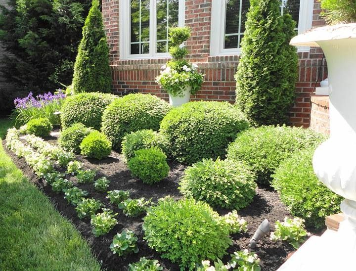 Flowerbeds bushes shrubs landscaping pinterest for Green bushes for landscaping
