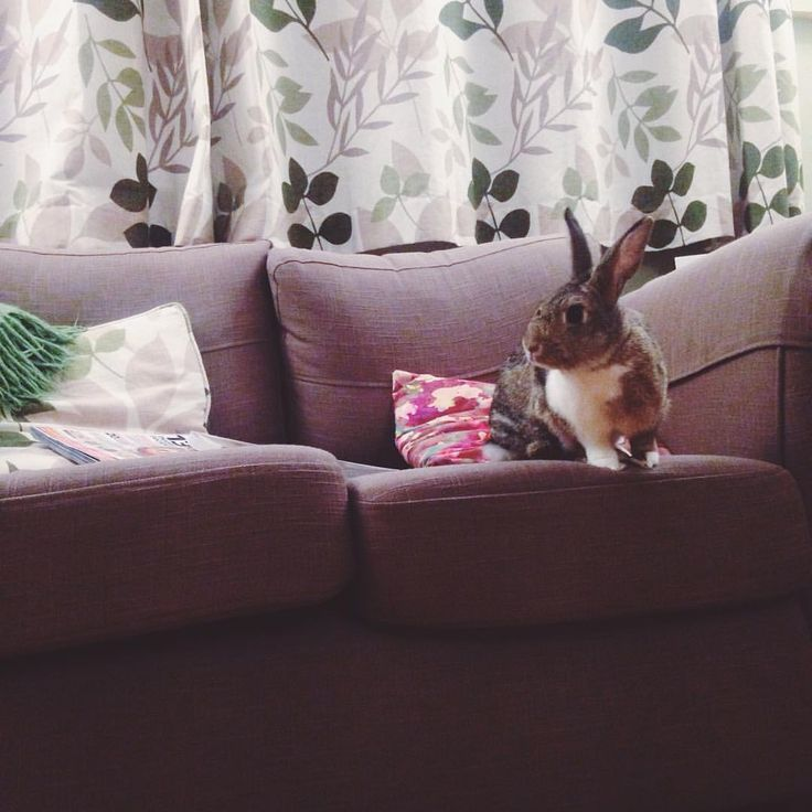 It's a lazy, stay in your pjs and don't leave the sofa kinda day  Odie 100% approves. We're making the most of being able to chill and do nothing before heading back to Bristol tomorrow and starting back at work Monday. #bliss #housebunny #bunniesofinstagram #crazybunnylady #bunnymama #love #lazyday #vscocam #instapets #bunnychild #furbaby