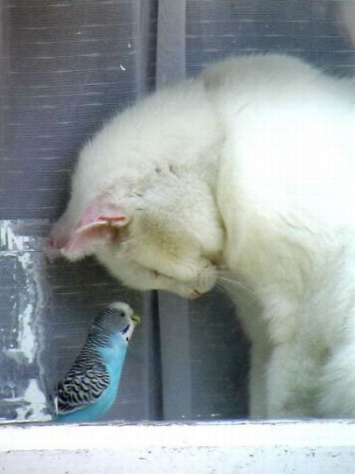.Thank You Lord, Best Friends, Sweets, Namaste, Kitty, Birds, New Friends, Animal, White Cat