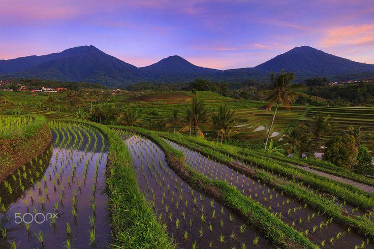 Sunrise at Jatiluwih Ricefield, Tabanan - Bali