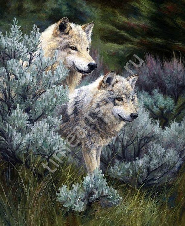 Волчья пара Набор для творчества: картина раскраска по ...