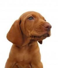 Finn hunderaser som passer deg - Hunderase leksikon