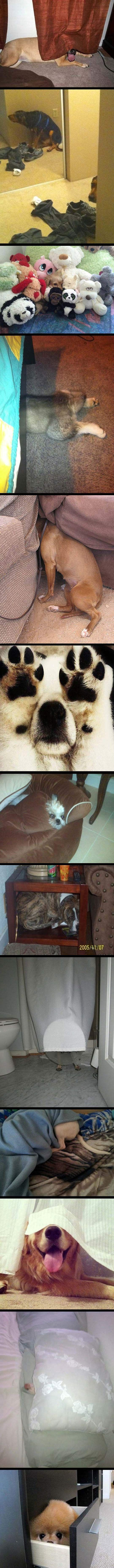 Dogs that are really bad at hide and seek…