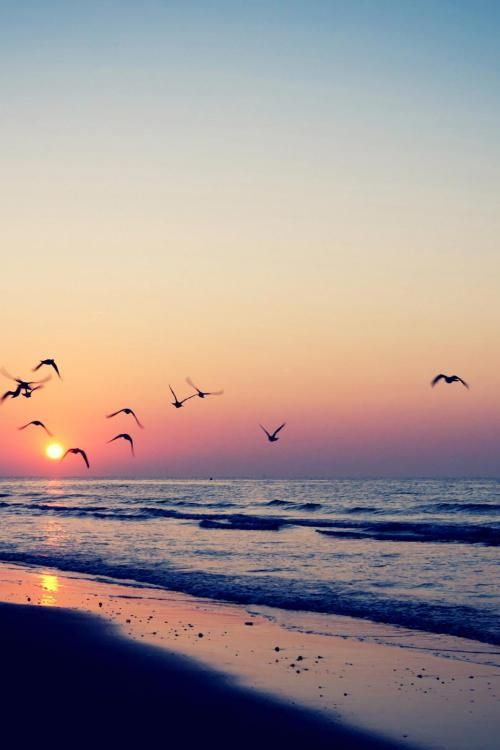 Birds in the Sunset on the Beach