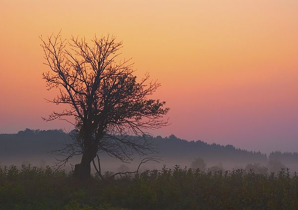 A solitary tree against an orange and red sunrise at the Forks of the Credit in Caledon Ontario, part of the Ontario Parks system and the Niagara Escarpment biosphere.