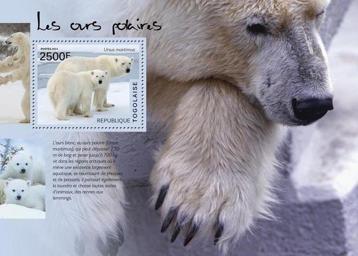 TG 14520 bPolar bears (Ursus maritimus)