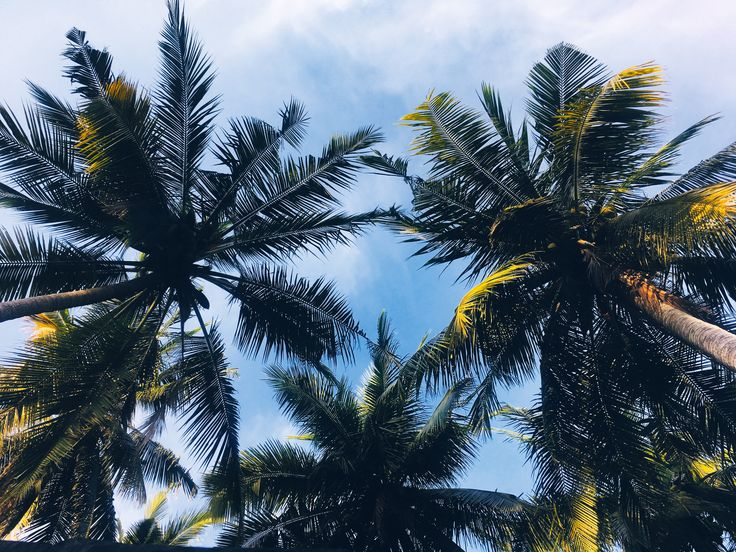 Palm tree at Gili Island 🌴  #palmtree #giliisland