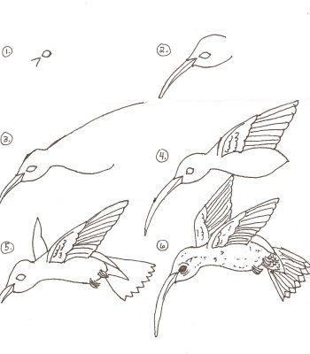 line drawing to go with spring hummingbird project
