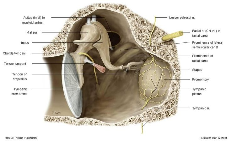 middle ear anatomy - Google Search