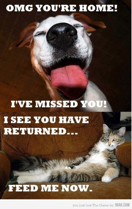 so trueDogs They R, Dogs Cat, Dogs Personalized, So True, I Love Cat, Funny Stuff, Dogs Rules, Favorite Funny, Cat Lady