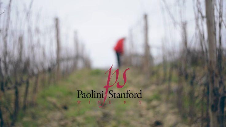 Ogni sorso di vino ha la sua storia: qui trovate quella di PS Winery e dei suoi vini biologici.