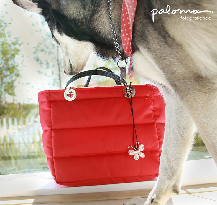 Foto de producto, Perro, bolsas rojas, bolsas, rojo