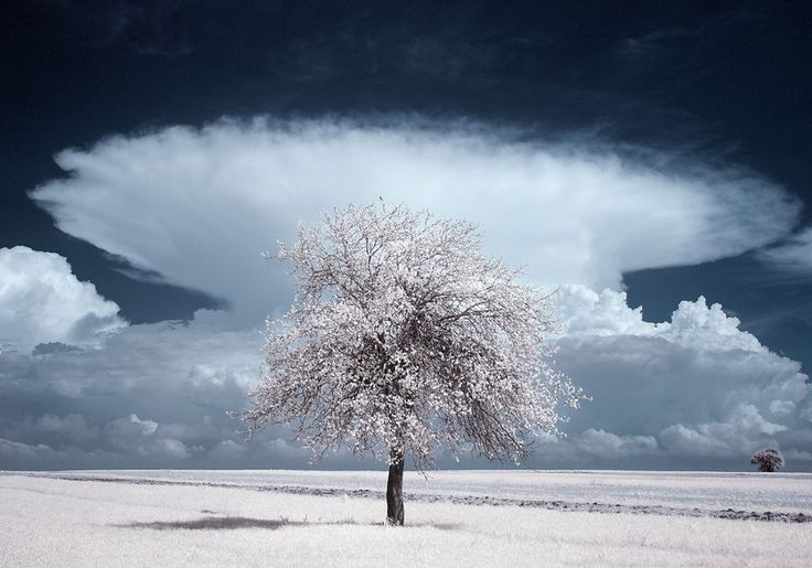 La Beauté majestueuse des Arbres en Pologne capturée par la Photographie infrarouge (8)